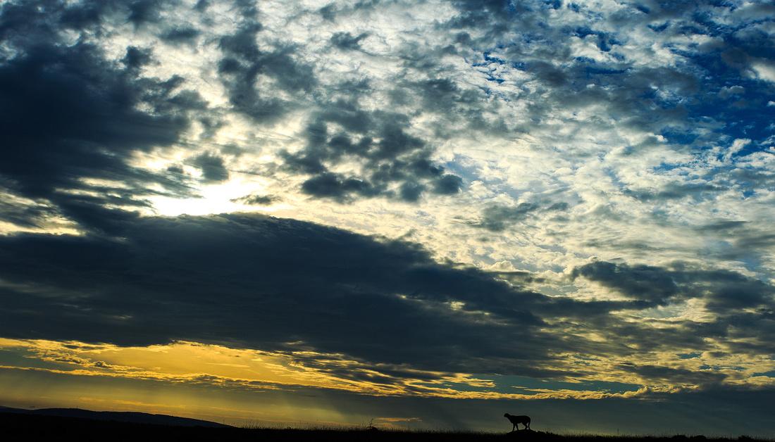 Amani at Dawn