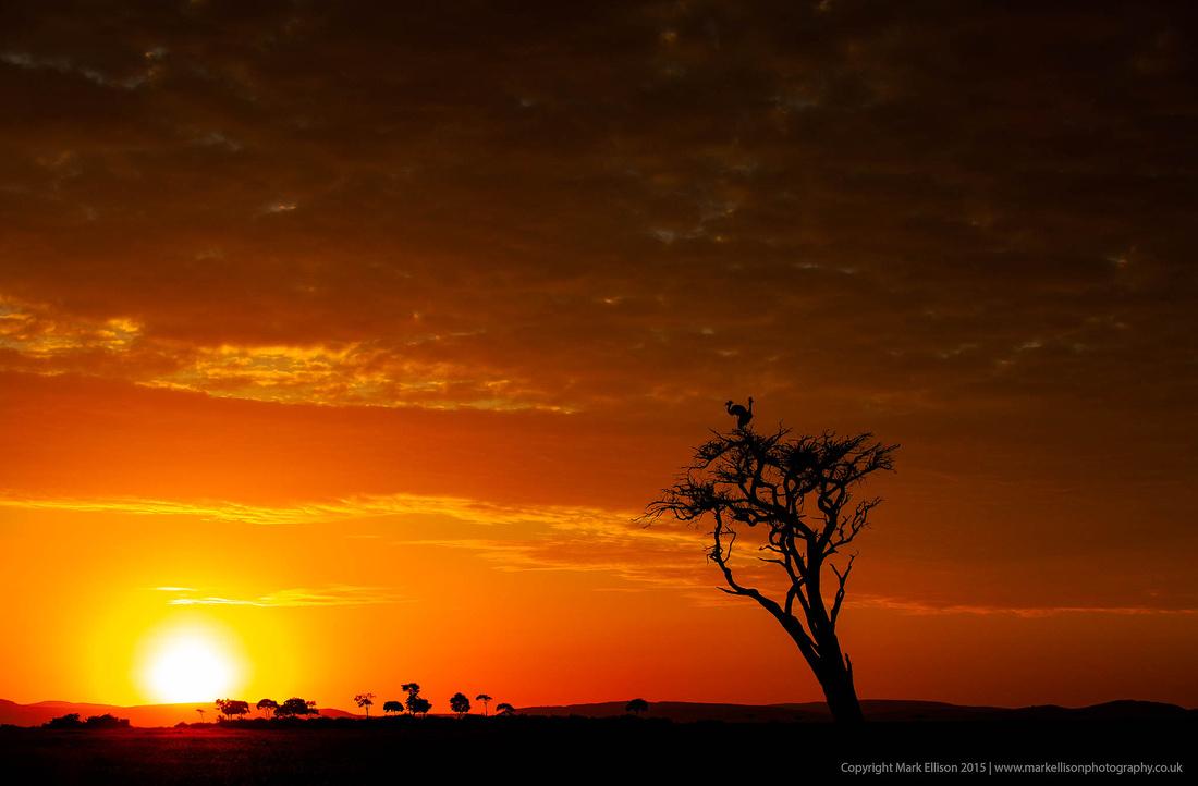 Crested Cranes at Sunrise
